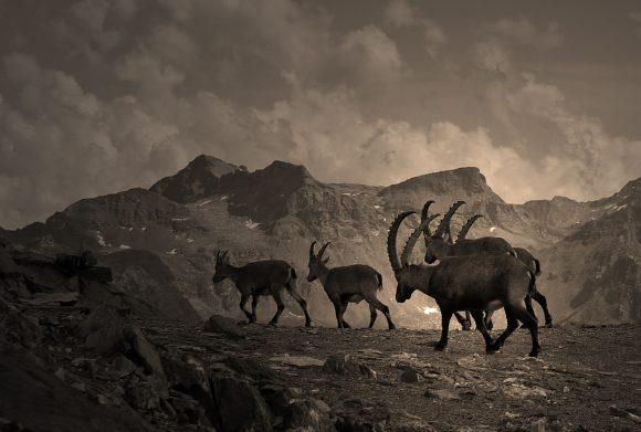 26-TR Montblanc Matterhorn Monterosa_221a